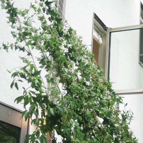 植栽(張力2.5kg対応)