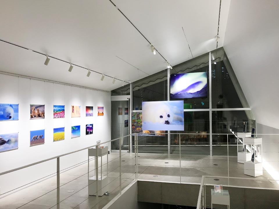 Azuma Hotta Photo Exhibition & Acrylic ART